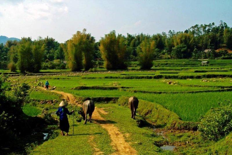 Paysage Vietnam - Guide francophone au vietnam