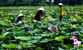 La province de Dong Thap Guide francophone Sapa Bac Ha
