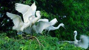 Le parc aux oiseaux de Vam Ho