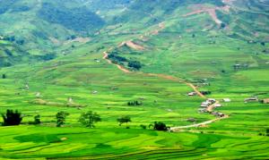 Les rizières en terrasse Hoang Su Phi