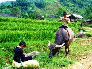 Village Sapa