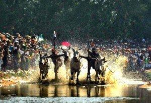 La course de boeufs des Khmers à An Giang