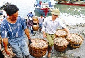 La pêche dans le district de Vân Dôn.
