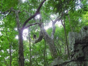 En pleine jungle dans le Parc national de Bai Tu Long.