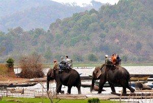 Dos d'éléphant