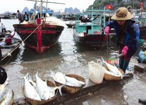 Tourisme Van Don Halong Quang Ninh