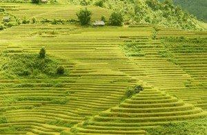des rizières en terrasse Mu Cang Chai