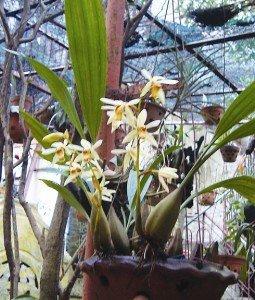 L'orchidée Symbole de l'âme des Hanoïens