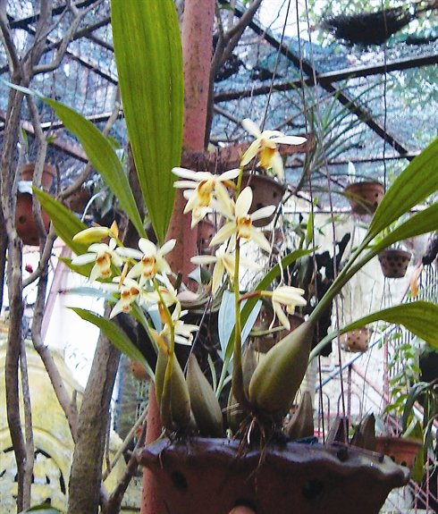 orchidee hanoi