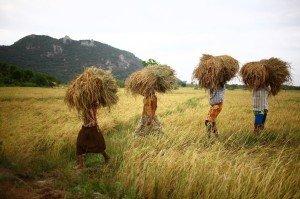 Visiter pays Laos sur Net