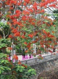 Le flamboyant rouge