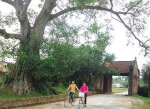 Un portique d'entrée et un arbre séculaire, des caractéristiques d'un village traditionnel du Vietnam