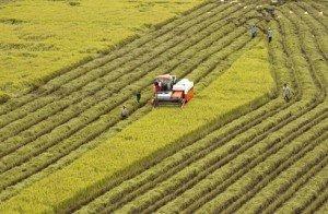 La rizière à perte de vue constitue une image typique de la campagne vietnamienne.