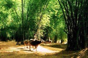 des images de la campagne vietnamienne.