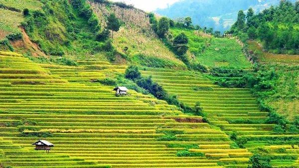 Mu Cang Chai et Rizieres en terraces