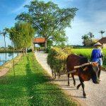 Ancien village Hanoi