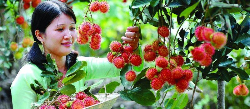Cueillir des fruits - Expériences extraordinaires Sud Vietnam